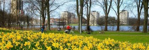 Narcis-Sloterplas-1
